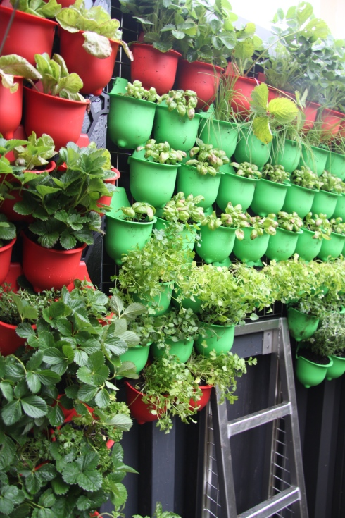 Vegiewall herb or green smoothie wall for indoors or outdoor walls.