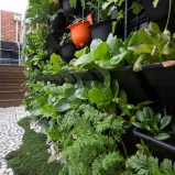 Incorporating the ground plane and vertical walls in one landscape