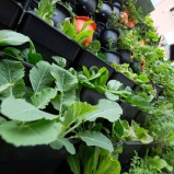 Moveable pods for easy access to vegies every day
