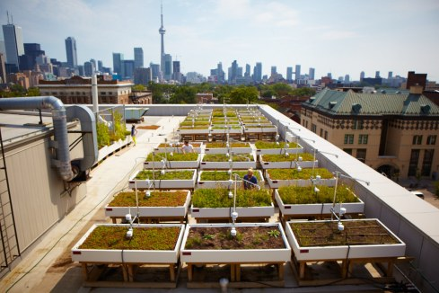 u_of_t_green_roof_0052_Credit_Sandy_Nicolason